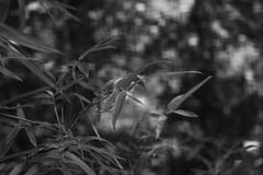Bokeh Squared (bamboosage) Tags: lens 45 50 enlarger schneiderkreuznach componar