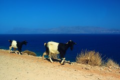 ..:> (Anne takes photos) Tags: summer 6 colors animal animals canon colorful view goats simply balos 600d