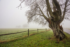 Alone in the Mist (Katka S.) Tags: park morning mist mountains tree green nature grass fog rural forest fence spring meadow national mysterious bohemian umava