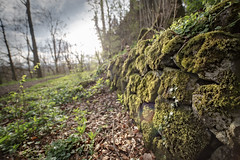 Alte Mauer (memories-in-motion) Tags: old trees green wall forest canon way eos moss eifel grn wald 15mm moos weg distagon efeu aremberg