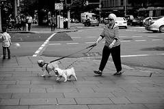 Woman with dogs (Sidney 2016-2) (AST - Photos) Tags: sidney australia blackdiamond blackwhite bw street streetphotography