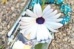 Flower (katherinedudleyphotography) Tags: travel blue italy white flower art photography mirror shiny italia artistic photgraphy refleciton