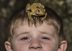 DSC02485 (advertisingwv) Tags: west macro virginia sony frog josh southern wv toad alpha a77 shackleford beckley advertisingwv