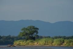 Zambia_  20162016-05-0215-52-07 (C_Baltrusch) Tags: christian safari afrika zambia sambesi selfdrive sambia zambeziriver baltrusch