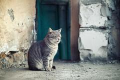 Street cat 155 (Yalitas) Tags: pet cats cat canon kat feline chat kitty gato felino katze katzen kot kedi kass gatta streetcat kotka  kocka  katte  katzchen kottur