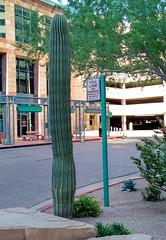 Urban Saguaro (incidencematrix) Tags: city travel cactus blackberry saguaro priv