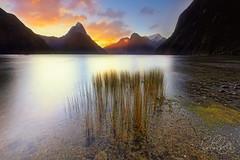 MILFROD   |    SOUND (Benz Catbagan) Tags: alps sunset sky southisland sun clouds canon calmness dawn filter glow grass newzealand ngc nz nzmustdo