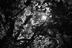 Trees of the summer nights (victoria_kudashova) Tags: summer blackandwhite tree beauty canon way photography perception photographer darkness bokeh creepy scared helios44m
