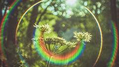 Nature's Smile (Dhina A) Tags: smile vintage bokeh cd sony flare 20mm f28 soligor spiratone fdmount sonyalpha cambron pluracoat spiratone20mmf28 a7rii a7r2 ilce7rm2