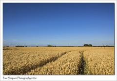 Lincolnshire Farming (Paul Simpson Photography) Tags: farm farmland field fieldsofgold summertime sunshine sonya77 imagesof imageof paulsimpsonphotography photosof photoof nature naturalworld bluesky farming lincolnshire lincolnshirewolds
