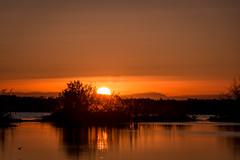 D11300E7 - Sunrise Over The Water (Bob f1.4) Tags: sunrise over water orange sky clouds california sacramento delta ca reflection mountains bushes trees