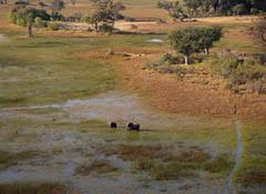 View From Above IV (www.mattprior.co.uk) Tags: adventure adventurer journey explore experience expedition safari africa southafrica botswana zimbabwe zambia overland nature animals lion crocodile zebra buffalo camp sleep elephant giraffe leopard sunrise sunset