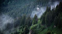Seilbahn (Num@n) Tags: lauterbrunnen wengen grindelwald lauterbrunnental jungfrau eiger mnch lauberhorn mnnlichen royal walk seilbahn interlaken thun thunersee zrich grn green tanne tannenwald wald berg gipfel felsen moos