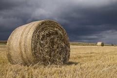 La botte **---+ (Titole) Tags: botte paille straw stormy sky harvest titole nicolefaton field bale unanimouswinner thechallengefactory friendlychallenges 15challengeswinner herowinner