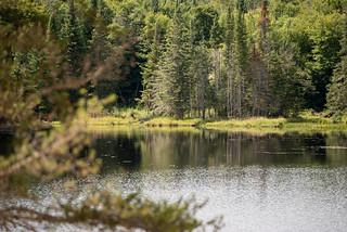 Quebec Elk & Red Stag Hunt 78