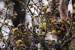 Cat in a Tree (C McCann) Tags: park canada cat chat bc britishcolumbia kitty victoria vancouverisland gato summit neko meowser