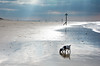 """""""West Wittering Beach"""" """"West Sussex"""" (Mr Whites Paw Prints) Tags: westsussex jackrussell nibbler westwitteringbeach"""
