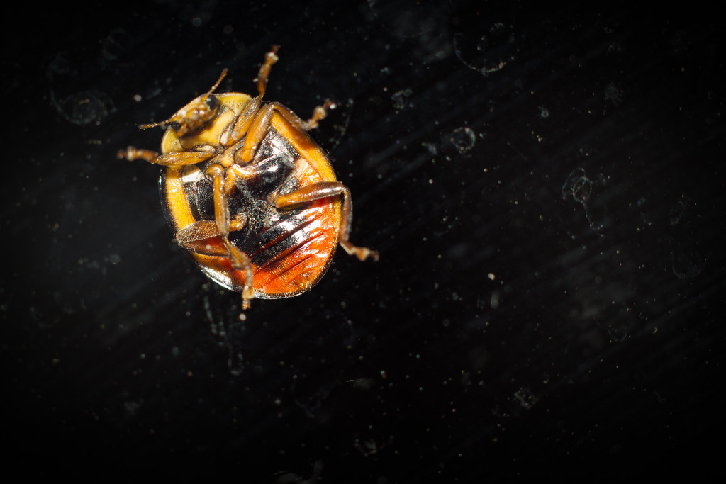The Worlds Best Photos Of Ladybug And Underside Flickr Hive Mind