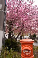 DS7_1468.jpg (d3_plus) Tags: street sea sky plant flower nature car rain japan drive spring scenery cloudy wideangle rainy  cherryblossom  sakura   shizuoka    touring  izu  kawasaki  superwideangle  kawazu         a05  kawazuzakura  1735mmf284 tamronspaf1735mmf284dildasphericalif tamronspaf1735mmf284dildaspherical d700  nikond700 tamronspaf1735mmf284dild tamronspaf1735mmf284 kawazucherryblossom tamronspaf1735mmf284dildasphericalifmodela05