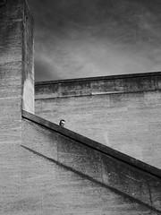 concrete jungle I (donvucl) Tags: bw london concrete southbank figure bwcomposition donvucl olympusem1
