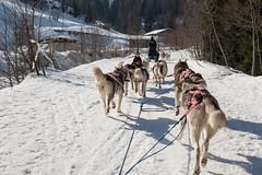 DSC03347_s (AndiP66) Tags: sony dscrx100ii dscrx100m2 rx100ii rx100m2 andreaspeters husky tour hundeschlitten schlittenhunde eskimo dog sled sledge oberwald wallis goms obergoms oberwallis winter schweiz suisse switzerland schnee snow mountains berge alps alpen obergomsvs valais