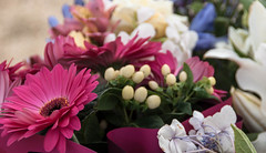 Floral Tributes (Jocey K) Tags: flowers newzealand christchurch gerbera tribute remembrance ctvsite february222015