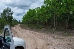 "GWD Forestry - Brazil Images <a style=""margin-left:10px; font-size:0.8em;"" href=""http://www.flickr.com/photos/47172958@N02/16949174877/"" target=""_blank"">@flickr</a>"