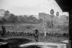rain in a school yard