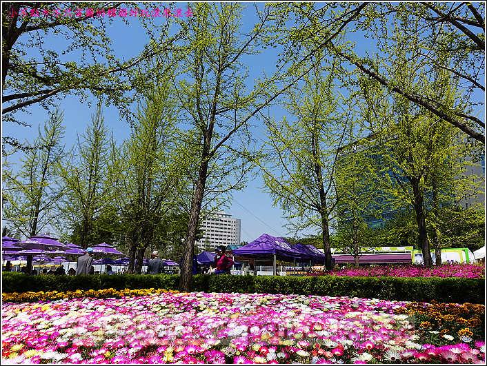 高陽國際花卉博覽 (14).JPG