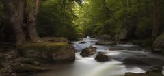 the two trees (~Fred Wolfe~) Tags: westvirginia waterfalls millcreek newrivergorge ansteadwv millcreekanstead