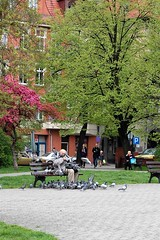 Gobiarz (klio2582) Tags: tree bird bench spring feeding pigeon bytom