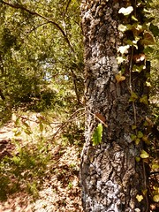 Prades ( Baix Camp ) (11) (calafellvalo) Tags: rural village pueblo reus baixcamp roja prades capafonts colorada pobles calafellvalo muntanyesdeprades encarnada abellera clavellines pradesabelleracapafontsbaixcampvermellacalafellvalo