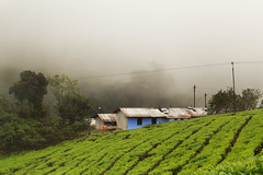 Megamalai (MGaneshKumar) Tags: india green love nature canon lights yahoo tour village ngc hills scenary tamilnadu trave teaestate 2015 ruralindia megamalai ganeshkumarmurugesan prayanakathas