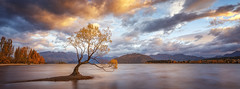 That One Tree (artjom83) Tags: wanaka tree nz newzealand downunder lake sunrise sunset water waterscape landscape clouds light outdoor mountains southern alps southisland autumn colors world travel sky longexposure peaks town shore lonely island south 2015 famous place