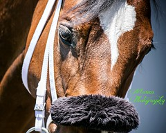 Swell (EASY GOER) Tags: portrait horse sports canon belmont racing 5d zilla 56 equine thoroughbreds 400mm markiii
