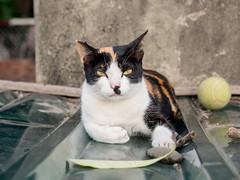 P4085777 (daisuke1230) Tags: cat olympus neko em  m43