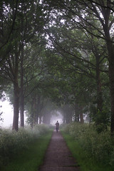(esmeecadoni) Tags: morning trees light sky mist holland tree green nature netherlands fog forest landscape photography woods europe outdoor sony minimal simplicity simple minimalistic drenthe littlethings beautifulearth