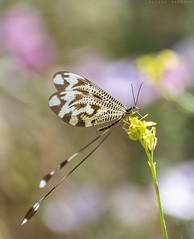 EL duende (sergio estevez) Tags: flowers naturaleza insectos macro flor micro duende sergioestevez