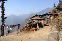 Grosswsche (Alfesto) Tags: nepal trekking wanderung paiya cheplung