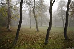 Niebla en Olarizu (lautada) Tags: niebla olarizu tiempo nubes amanecer alava araba euskalherria vitoria gasteiz