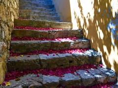 Symi - L'escalier sous le bougainvillée (Docaron) Tags: grèce greece dodécanèse dodecaneseislands meregée egeansea symi σύμη δωδεκανήσου ελλάδα δωδεκάνησα ελληνικάνησιά escalier stairs couleurs colors colours dominiquecaron