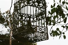 (klolam) Tags: travel film birdcage leaves lines silhouette 35mm outdoors pentax kodak taiwan analogue pentaxmesuper whimsical kodakfilm littlethings kodakultramax