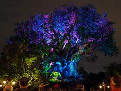 Walt Disney World - July 2016 (amyangel96) Tags: travel disney waltdisneyworld animalkingdom treeoflife awakenings