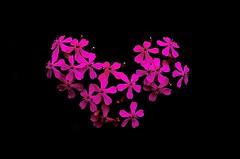 Flower heart (Ricccca K) Tags: flower love heart pentax k5
