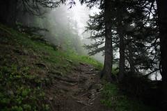 hello again, mr. fog (Toni_V) Tags: summer mist alps fog schweiz switzerland europe dof nebel suisse bokeh hiking sommer rangefinder trail mp alpen svizzera wald wallis valais wanderung wanderweg randonne 2016 svizra oberwallis escursione summiluxm leicam glishorn 35mmf14asph 35lux messsucher 160625 35mmf14asphfle typ240 toniv m2400411 brigglishornbrig schrattmattustaffel