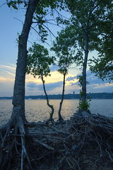 rosion (Patrice StG) Tags: tree river qubec stlawrence stlaurent arbre fleuve stlawrenceriver d700 nikkor1835g
