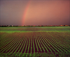 Evening rainbow (Katarina 2353) Tags: film field landscape rainbow nikon europe serbia vojvodina srbija katarinastefanovic katarina2353