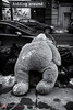 (Gus.Castillo) Tags: bear snow newyork toy garbage fuji manhattan gustavo teddybear gac unionsquare castillo kiddingaround xt1 discraded gacphoto guscastillocom