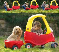 Drivetime with Roni (jayneboo) Tags: odc adventure play car drive buggy dog pet friend child toddler granddaughter roni poopy cockerpoo happy funny cute dogphotographyshropshire