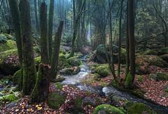 Serenity Calling (@hipydeus) Tags: nature water fairytale creek forest bayern bavaria moss rocks wilderness enchanted märchen